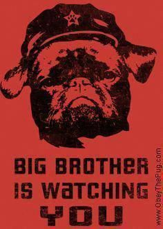 Big Brother - Black Pug : Obey the pure breed! The Dog Revolution Dog Training School, Training Your Puppy, Dog Training Tips, Training Quotes, Mites On Dogs, Dog Whisperer, Easiest Dogs To Train, Black Pug, Aggressive Dog
