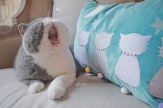 Gray Is a Very Sleepy Cat Who Loves a Good Nap and Boy, Can We Relate - World's largest collection of cat memes and other animals Puppies And Kitties, Cute Cats And Kittens, I Love Cats, Kitty Cats, Kittens Cutest, Doggies, Very Sleepy, Sleepy Cat, Flat Faced Cat