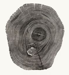 Designspiration — 4 | Beautiful Photos Of Tree Rings Remind Us To Slow Down A Little | Co.Exist: World changing ideas and innovation