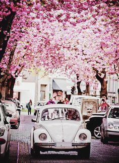 Photo diary: radio, cars, food & spa - Lifestyle NWS