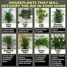 Houseplants that clean the air in your home.