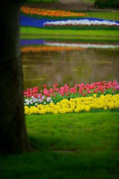 Tulip Garden - Tokyo, Japan