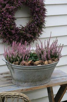 Tips til hvordan du kan lage en krans av røsslyng. Outdoor Garden Decor, Outdoor Gardens, Fall Home Decor, Holiday Decor, Deco Floral, Garden Borders, Backyard Projects, Fall Flowers, Small Gardens