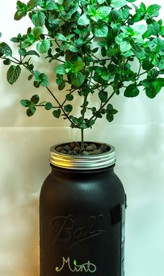 Hydroponic Gardening Ideas Macro Garden: DIY Mason Jar: Non-Circulating Hydroponics (AKA the Kratky method) - Don't let tiny living keep you from gardening! Here are some ideas for growing herbs Mason Jar Herbs, Mason Jar Herb Garden, Mason Jar Lamp, Hydroponic Farming, Hydroponic Growing, Hydroponic Shop, Indoor Hydroponics, Aquaponics Greenhouse, Hydroponics System