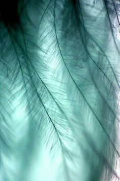 Feathers or leaves aqua teal turquoise