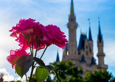 flowers at the Happiest Place on Earth ∞