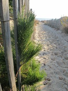 Beach Rehoboth - Deleware, USA