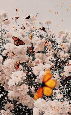 Tumblr Wallpaper, Wallpaper Pastel, Butterfly Wallpaper Iphone, Lock Screen Wallpaper Iphone, Sunflower Wallpaper, Iphone Background Wallpaper, Aesthetic Pastel Wallpaper, Aesthetic Backgrounds, Nature Wallpaper