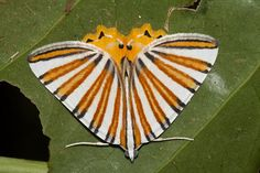 Colorful moth by Natalie McNear, via Flickr