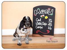 St David's Day. Welsh dog. Pets. Rhian Pieniazek Photography 2014.