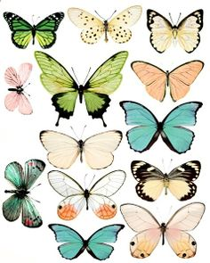 many gorgeous butterfly printables - use to make wind-up butterflies