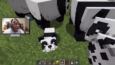 Ksi's reaction to pandas in minecraft, Funny Minecraft Videos, Video Minecraft, Steve Minecraft, Amazing Minecraft, Minecraft Tutorial, How To Play Minecraft, Minecraft Memes, Minecraft Stuff, Super Funny Videos