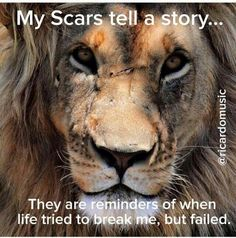 This is onel of the spectacular species I fight for..Big Cat rescue...and photo and words are so me....