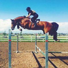 No scope no hope.  #equestrian #horse #horses #equestrianperformance