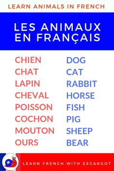 Bonjour, Learn 21 animals in French + sentences as an example. To learn more, watch the video ! Useful French Phrases, Basic French Words, How To Speak French, French Lessons For Beginners, Learn French Beginner, French Language Lessons, Spanish Language Learning, Spanish Lessons, French Basics
