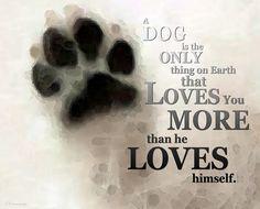 So true  #dog #quotes