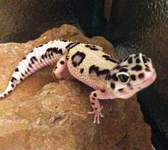 Gecko smiles | Flickr - Photo Sharing!