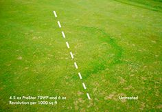 Revolution can improve the efficacy of fungicides against Fairy Ring.