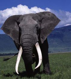 Elephant at Ngorongoro Crater, Tanzania