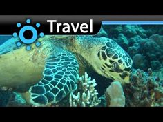 El Quseir el Quadim (Egypt) Vacation Travel Video Guide - http://bookcheaptravels.com/el-quseir-el-quadim-egypt-vacation-travel-video-guide/ - Vacation travel video about destination El Quseir el Quadim in Egypt.   On Egypt's African coast is the El Quseir el Qadim Marine Reserve. The former harbour of an ancient city, it contains one of the richest coral reefs in the Red Sea.Since 1995 it has provided eco tourists with the possibility t - Egypt, Guide, Quadim, Quseir, Trav
