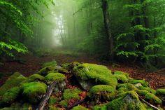 Get lost in the Ayguebonne Forest. Puy de Dôme, France.