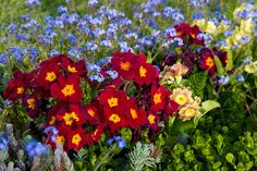 Red Blue Yellow - Cottage Garden | by fstop186