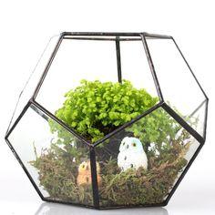 JINCAO - Terrario a forma di pentagono, in vetro, geometrico, aperto, centrotavola, vaso per piante grasse, felce e muschio: Amazon.it: Casa e cucina