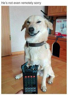 heheh.. get it? Remotely?? Remote?? Ahahah....