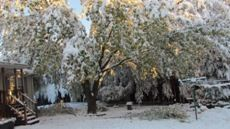Beautiful morning sun streaming through snowy trees and bushes in our back yard