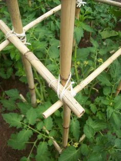 Yarn wrapped around the bamboo and tied with square knots is all that holds these cages together.