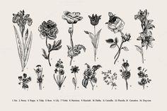 https://creativemarket.com/olga.korneeva/231183-Botany.-Card-and-set.-Illustration.