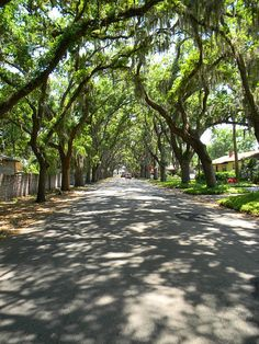 I love the Spanish Moss hanging from the trees above this street in St. Augustine, FL