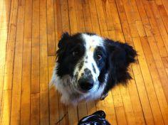 Bobby the Dog
