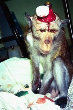 vivisection_01