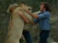 Two Men Reunite with their Lion in the Wild - Unbelievable Video!