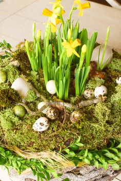 Osterdeko mit Natur: DIY Osternest mit Moos, Holzkorb, Narzissen, Eiern, Buchs. Einfach selbermachen