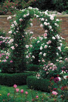 Image result for generous gardener rose