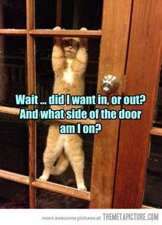 Typical Cat Logic…