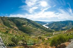 Wein aus Portugal: Ein Weinland im Kommen