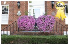 These beautiful purple petunias and spike plant are on our front railing and everyone comments on how gorgeous they are! Purple Petunias, Railing Planters, Outside Plants, Best Windows, Window Boxes, Flower Boxes, Hanging Baskets, Fresh Flowers, Container Gardening