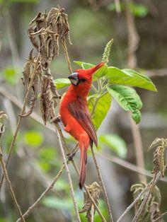 Visiter le désert de la Guajira / Voyage en Colombie Parrot, Birds, Animals, Cabo De La Vela, Natural Park, Tourism, Travel, Animales, Animaux