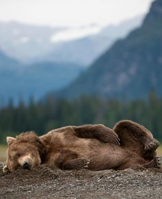 Bear with me while I take a quick nap.