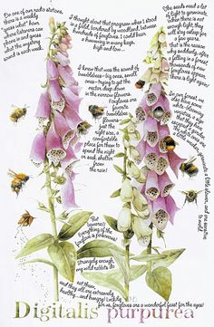 Marjolein Bastin - foxgloves & bumblebees... I mean, just LOOK at this!!!