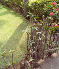 Chennai Garden Terrace . Chennai, Gardening Services, Terrace, Sidewalk, Plants, Design, Walkway, Patio, Terraces