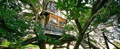 ツリーハウス【なんじゃもんじゃカフェ】は木の上の隠れ家カフェ♪   ギャザリー
