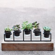 Can you guess what I used to create this fun little succulent planter? Bring nature indoors with these easy plants that last all year!