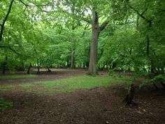Woods London Life, See It, Great Britain, Woods, England, Country Roads, Plants, Travel, Viajes