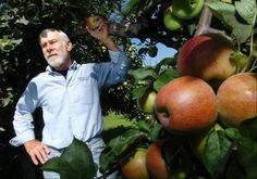 Apple orchards open for brief picking season