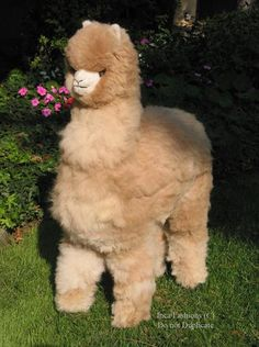 Life-Size Alpaca Want an alpaca? Baby Alpaca Wool Alpaca Figures are handmade from real alpaca fur bringing the beauty and love of alpacas into your home. Cute Baby Cow, Baby Animals Super Cute, Baby Cows, Cute Cows, Cute Little Animals, Cute Funny Animals, Baby Llama, Fluffy Cows, Fluffy Animals