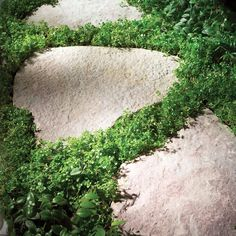 Planted Paths